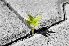 Pequeña planta verde Foto de archivo libre de regalías
