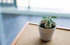 Pequeña planta verde en el pote en el fondo del tablero del corcho Imagen de archivo