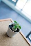 Pequeña planta verde en el pote en el fondo del tablero del corcho Fotografía de archivo libre de regalías