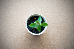Pequeña planta verde en el pote en el fondo del tablero del corcho Foto de archivo libre de regalías