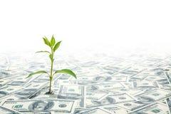 Pequeña planta verde que crece en el campo de las notas de los dólares Imagenes de archivo