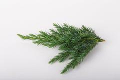 Pequeña rama de un árbol de navidad en el fondo ligero Closeu Fotos de archivo libres de regalías