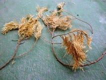 Pequeña rama seca de un árbol Fotografía de archivo