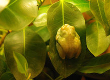 Pequeña rana verde Fotografía de archivo