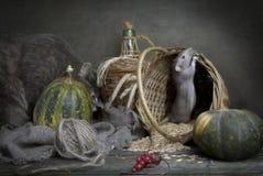 Peque?a rata gris linda, rat?n en una cesta con ma?z y calabazas y gato gris grande Todav?a vida en estilo del vintage con una ra