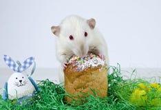 Pequeña rata linda Imagen de archivo
