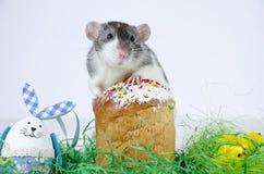 Pequeña rata linda Imagenes de archivo