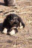 Pequeña sentada linda del perrito Imágenes de archivo libres de regalías