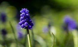 Pequeña seta azul Imagenes de archivo