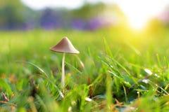 Pequeña seta en hierba Fotografía de archivo libre de regalías