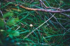 Pequeña seta sola en la hierba fotografía de archivo