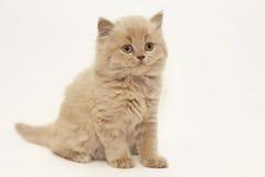 Pequeña sonrisa linda gris de británicos del gatito Foto de archivo libre de regalías