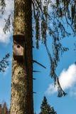 Pequeña tabla del pájaro en un árbol cubierto de musgo viejo imagenes de archivo