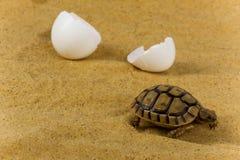 Pequeña tortuga Fotografía de archivo libre de regalías