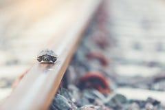 Pequeña tortuga Fotos de archivo