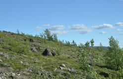 Pequeña vegetación septentrional entre los cantos rodados en la cumbre rocosa de la montaña Foto de archivo