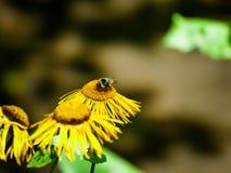 Pequeñas abeja y flor Foto de archivo