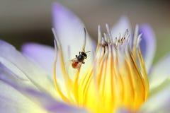 Pequeñas abeja y flor Fotografía de archivo libre de regalías