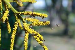 Pequeñas abejas Imagen de archivo libre de regalías