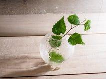 pequeñas botellas con el abedul de la planta en fondo de madera con las gotas de agua, la salud, la belleza y el concepto del tra fotos de archivo