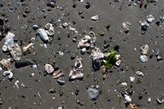 Pequeñas cáscaras mojadas en la playa arenosa Foto de archivo libre de regalías