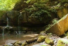 Pequeñas caídas en un matorral, la selva verde Imágenes de archivo libres de regalías