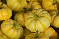 Pequeñas calabazas amarillas Imagen de archivo libre de regalías