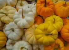 Pequeñas calabazas blancas, amarillas y anaranjadas en mercado callejero en la explosión Imagen de archivo libre de regalías