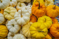 Pequeñas calabazas blancas, amarillas y anaranjadas en mercado callejero en la explosión Foto de archivo libre de regalías