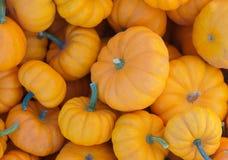 Pequeñas calabazas en la opinión de la cosecha del mercado para Halloween o la acción de gracias Foto de archivo libre de regalías