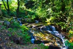 Pequeñas cascadas en centro de una naturaleza pura del bosque Imagenes de archivo