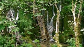 Pequeñas cascadas entre la madera muerta y el musgo verde en la cámara lenta almacen de video