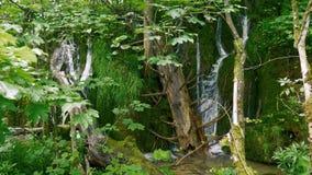 Pequeñas cascadas entre la madera muerta y el musgo verde almacen de metraje de vídeo