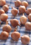 Pequeñas cebollas en un paño de la cocina Imagen de archivo