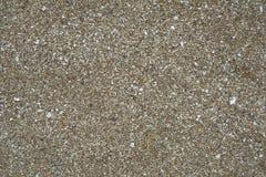 Pequeñas conchas marinas quebradas como fondo foto de archivo