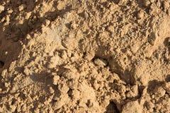 Pequeñas diapositivas en la superficie de la arena en la playa Foto de archivo