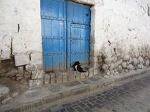 Pequeñas esperas del perro de la calle pacientemente para alguien imagenes de archivo
