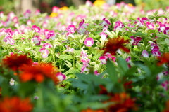 Pequeñas flor y luz 43 del fondo Imagen de archivo