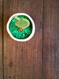 Pequeñas floras en la tabla de madera Fotografía de archivo libre de regalías
