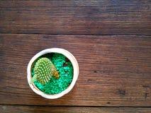 Pequeñas floras en la tabla de madera Imágenes de archivo libres de regalías