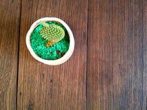 Pequeñas floras en la tabla de madera Imagenes de archivo