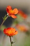 Pequeñas flores Imagen de archivo