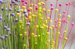 Pequeñas flores Fotografía de archivo
