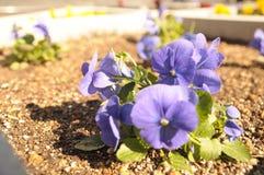 Pequeñas flores Fotos de archivo