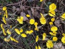 Pequeñas flores amarillas fotografía de archivo