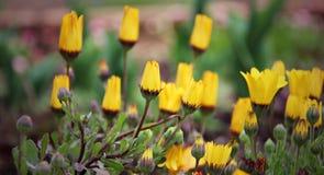 Pequeñas flores amarillas Imagen de archivo libre de regalías