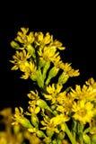 Pequeñas flores amarillas de un ramo imagenes de archivo