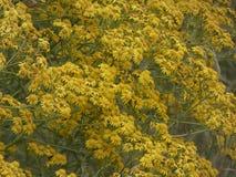 Pequeñas flores amarillas en primavera fotos de archivo libres de regalías