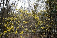 Pequeñas flores blancas en árbol en tiempo de primavera Imagen del primer fotos de archivo libres de regalías