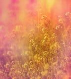 Pequeñas flores blancas hermosas del prado Imagen de archivo